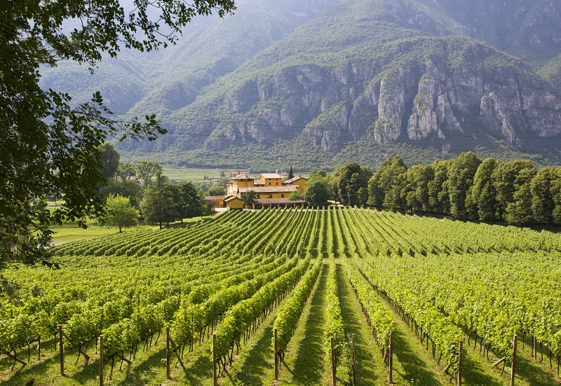 A winery in Trentino-Alto Adige, Italy